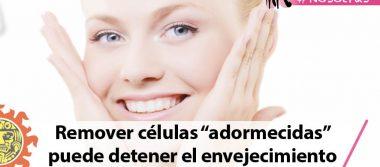 """Remover células """"adormecidas"""" puede detener el envejecimiento"""