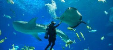 México, refugio de las especies marinas más grandes e icónicas del planeta