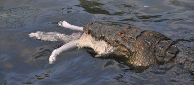 Venta de cocodrilos sin restricción en veterinarias
