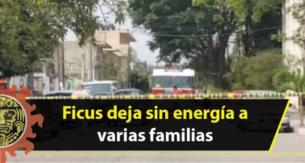 Ficus deja sin energía a varias familias