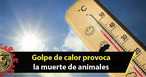 Golpe de calor provoca la muerte de animales