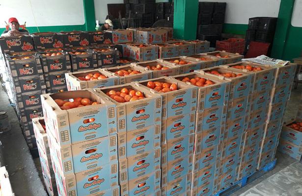 Registra el precio del tomate un aumento de 40 por ciento