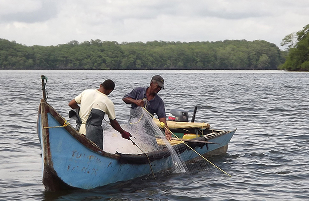 En peligro pescadores y habitantes por cocodrilos en la zona rural