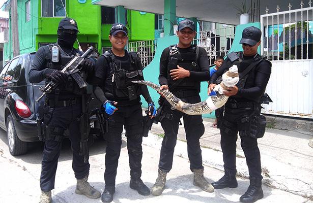 Arrestan a cocodrilo por agresivo