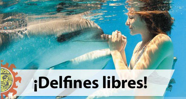 ¡Delfines libres! Prohíben su uso en shows y terapias en la CDMX