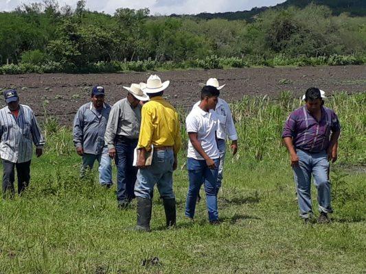 El ITA de Altamira instruyó a ganaderos sobre nueva variedad de zacate