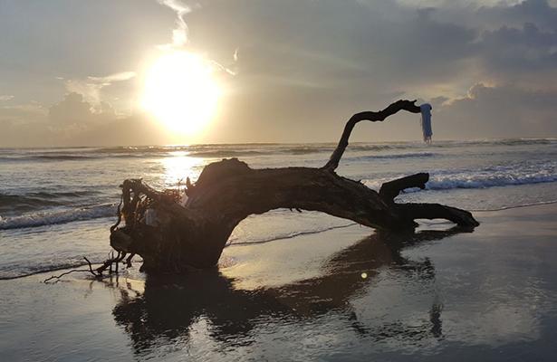 Gran cantidad de palizada llega a Playa Miramar
