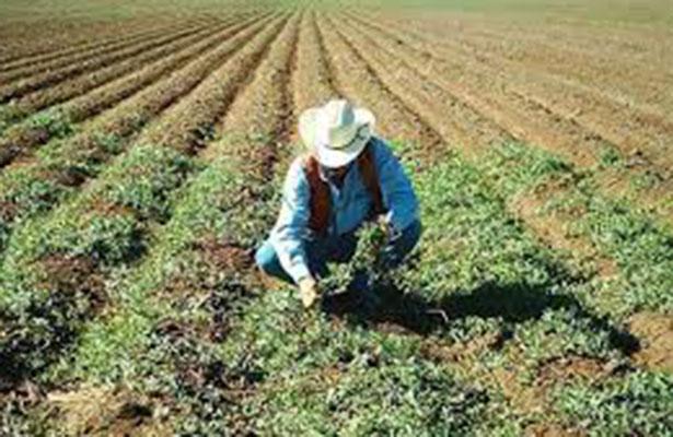 Apoyan a productores del campo tamaulipeco para encontrar nuevos mercados a sus productos