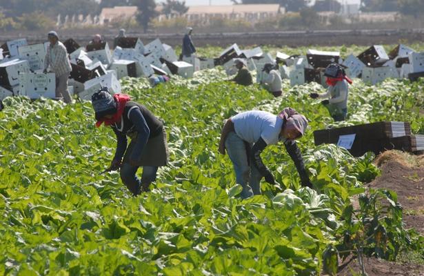Tamaulipas rebasa meta en programa de trabajadores agrícolas en Canadá
