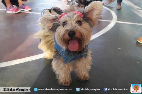 Mascota Fest en el Parque Méndez