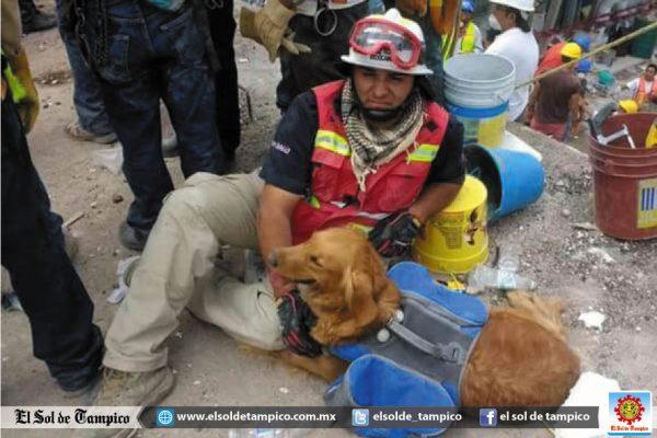 """""""Alondra"""" la perra rescatista de Tampico llegó a la CDMX"""