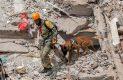 Agentes caninos, una fe para personas atrapadas entre escombros tras sismo