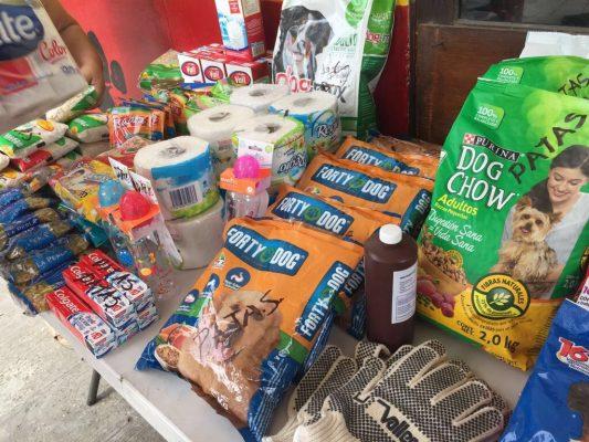 Solidaridad y apoyo a mascotas afectadas por sismo