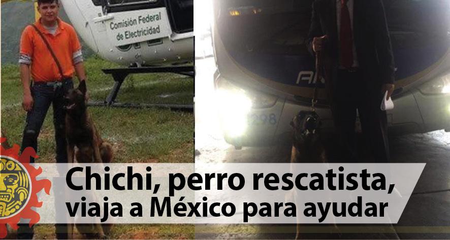 Chichi, perro rescatista, viaja a México para ayudar