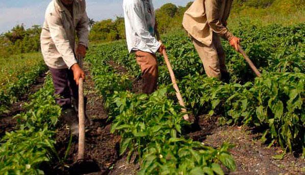 Resultado de imagen para agricultores