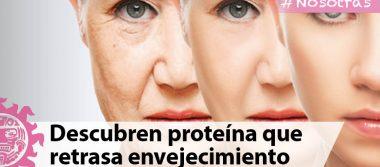 Investigadores descubren proteína que retrasa envejecimiento