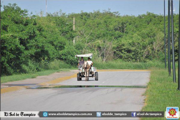 Entra en vigor Reglamento de Protección Animal en Tampico