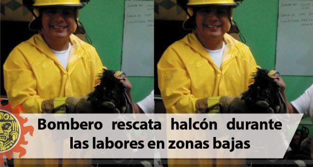 Bombero rescata halcón durante las labores en zonas bajas