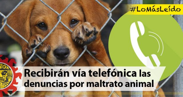 Recibirán vía telefónica las denuncias por maltrato animal
