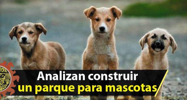 Analizan construir un parque para mascotas