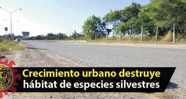 Crecimiento urbano destruye hábitat de especies silvestres