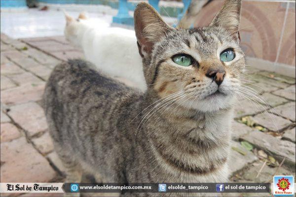 Gatos callejeros invaden el sur de Tamaulipas