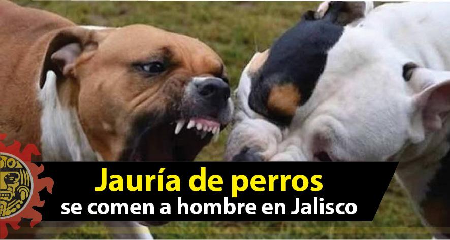 Jauría de perros hambrientos se comen a hombre en Jalisco
