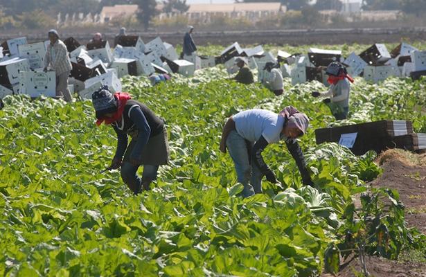 Desalentador, el panorama para el campo mexicano: CNC León
