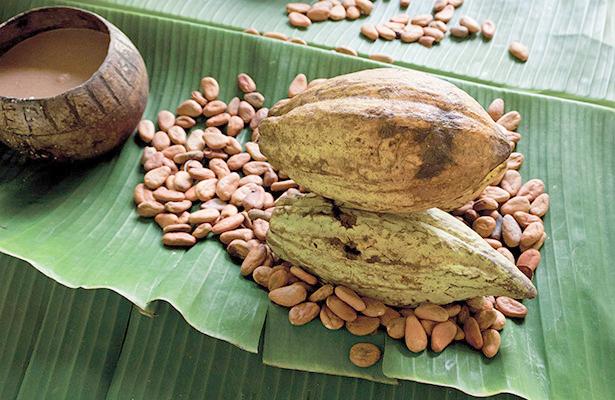 Cacao de contrabando afecta comercialización en el Soconusco