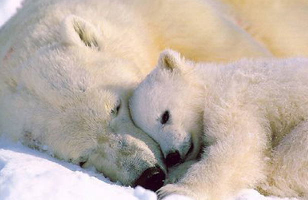 ¡Alerta mundial! Se acelera la sexta extinción masiva de animales