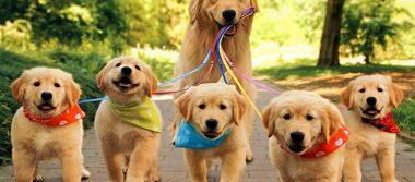 ¡Hoy se celebra el Día Mundial del Perro! 🐶