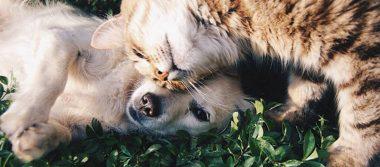 Tú no eres el único: los perros y gatos también engordan en invierno