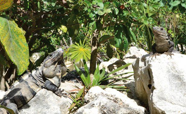 Amenazan ecosistema en Tulum, Quintana Roo