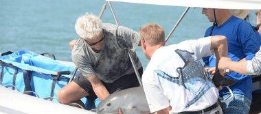 Localizan a la primera vaquita marina en su plan para salvar la especie