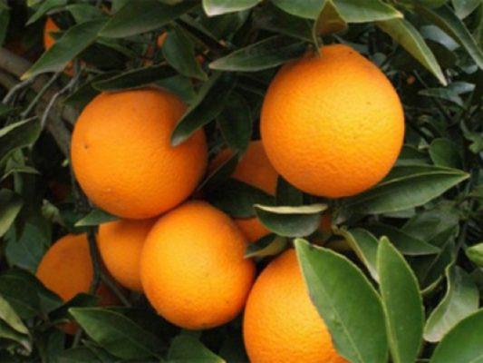 Cáscara de naranja, una alternativa para limpiar aguas residuales