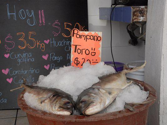 Buscan que TLC no grave productos pesqueros de BC