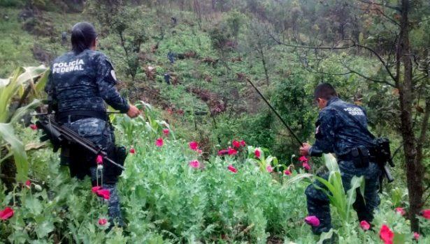 Incineran más de 12 toneladas de narcóticos en BC