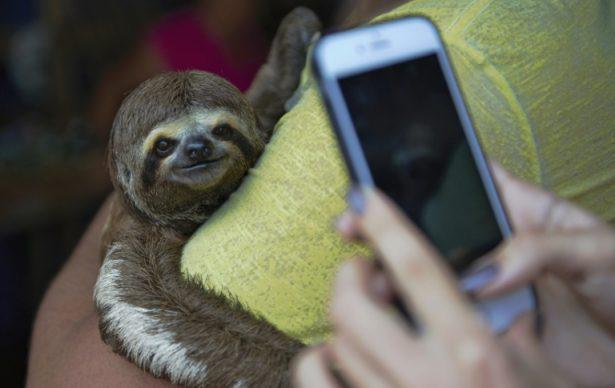 ¿Selfis con animales en la Amazonia? Una mala idea, advierte una ONG