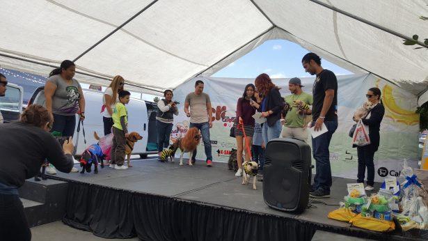 Invitan a donar alimento para perros y gatos en la décima edición de Croquetón