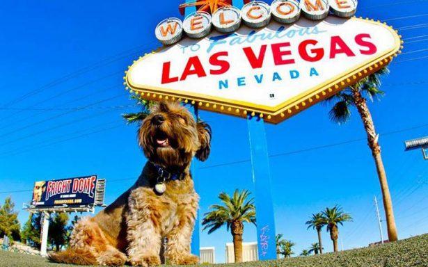 Estos son los mejores destinos para viajar con tu mascota