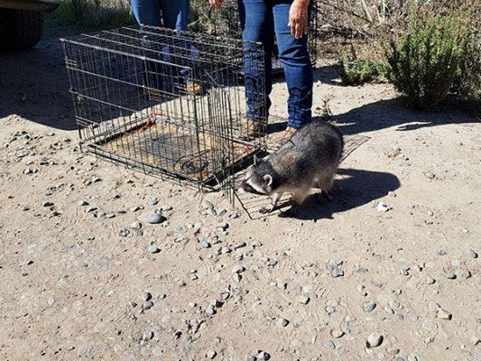 Procuraduría ambiental reintegra ejemplares de vida silvestre a su hábitat