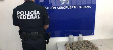 Incautan ocho kilos de peyote en aeropuerto de Tijuana