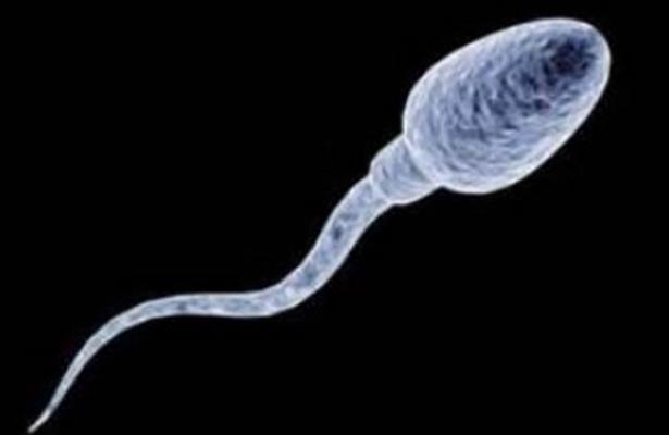 Científicos analizarán el esperma con ua APP