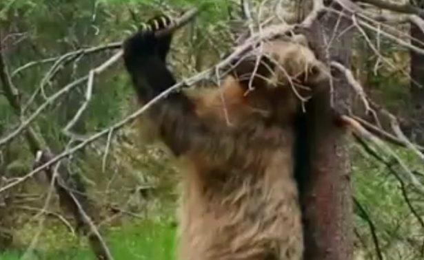 Joven se despierta y descubre que está…¡en el hocico de un oso!