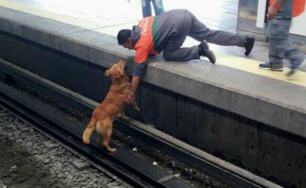 Denuncian omisión de trabajadores del Metro en muerte de perro