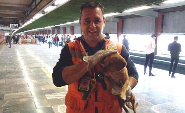A pocos días de polémico caso, Metro rescata a perrito de las vías