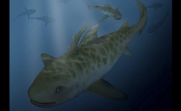 Descubren restos fosilizados de tiburón de 400 millones de años en Perú