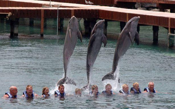 Impiden reformas para que no se utilicen delfines en espectáculos
