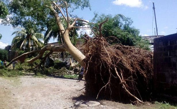 Tromba deja 19 árboles caídos y daños en Tapachula