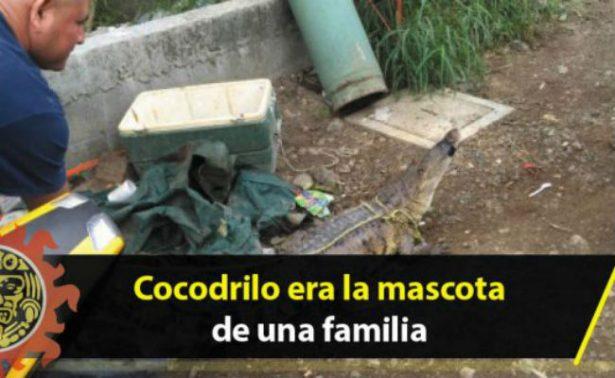 Familia de Tamaulipas tiene de mascota a ¡un cocodrilo!